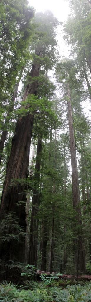 talltree1