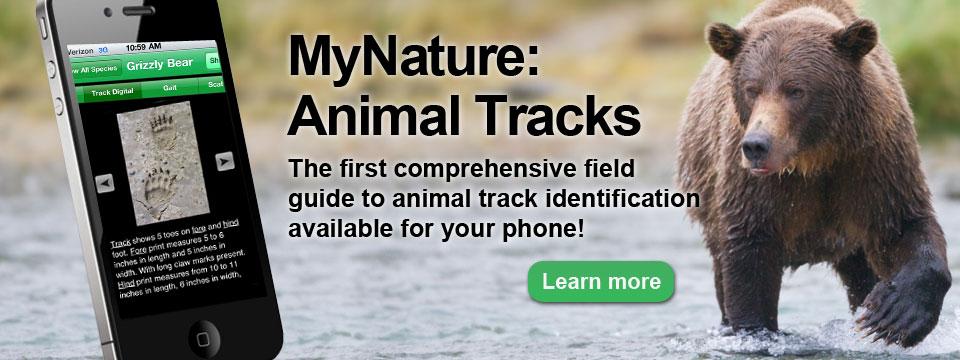 MyNature Animal Tracks