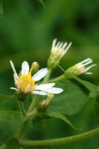 something_flower1