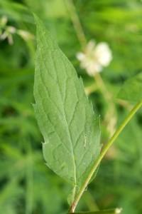 somethingflower_leaf