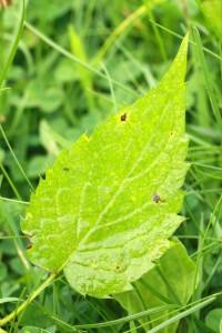 somethingflower_leaf2