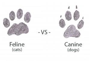 tracks canine feline